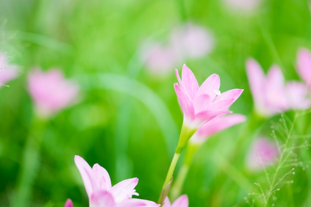 Lindas flores cor de rosa e grama verde primavera fresca