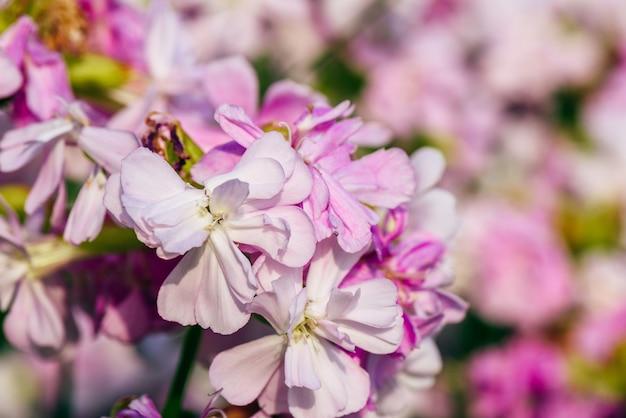 Lindas flores cor de rosa na mesa desfocada