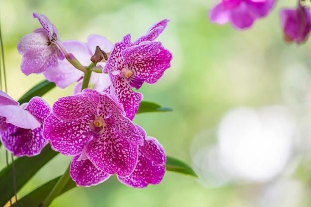 Lindas flores cor de rosa no jardim.