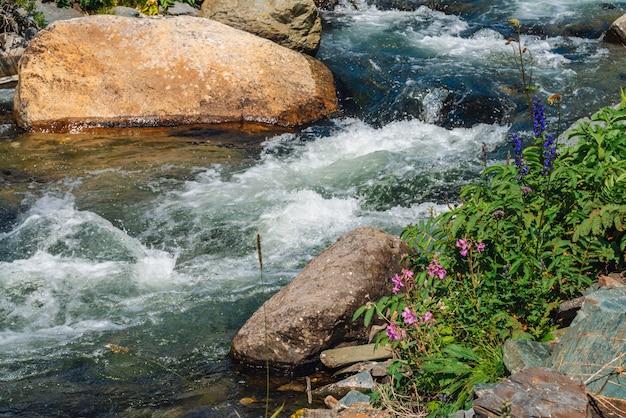 Lindas flores cor de rosa perto do riacho de montanha. pedregulhos grandes em close-up de fluxo de água rápido. corredeiras do rio com copyspace. fluxo rápido perto de pedras molhadas. fundo de ondas limpas. rica flora das terras altas.