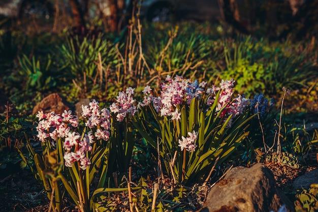 Lindas flores crescendo no jardim