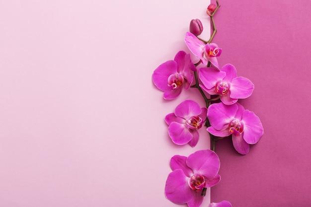 Lindas flores da orquídea