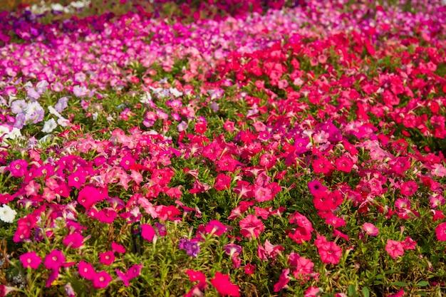 Lindas flores da tailândia