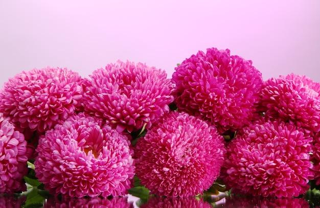 Lindas flores de áster, em fundo rosa