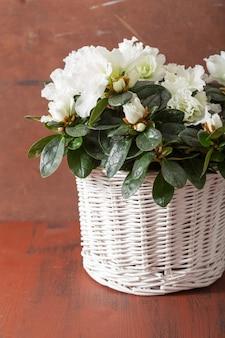 Lindas flores de azaléia branca em uma cesta sobre fundo rústico