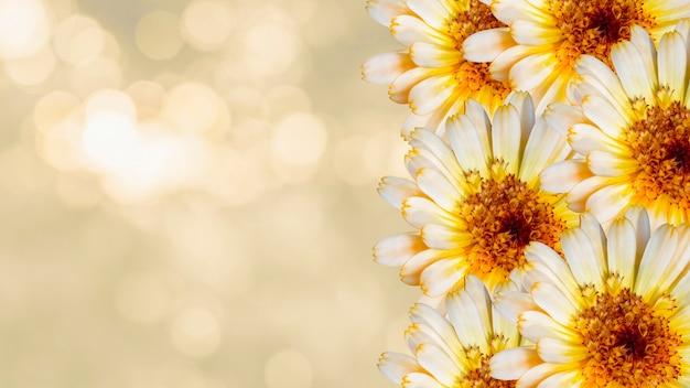 Lindas flores de calêndula em amarelo fundo desfocado. conceito de flores festivas. cartão floral com flores, copie o espaço.