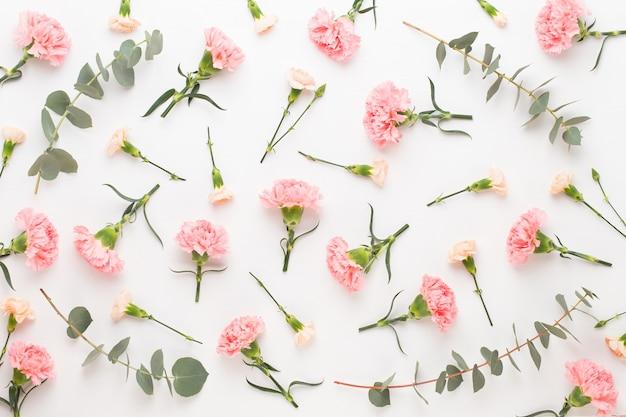 Lindas flores de cravo oink isoladas
