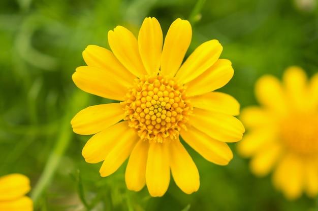 Lindas flores de margarida em um prado verde