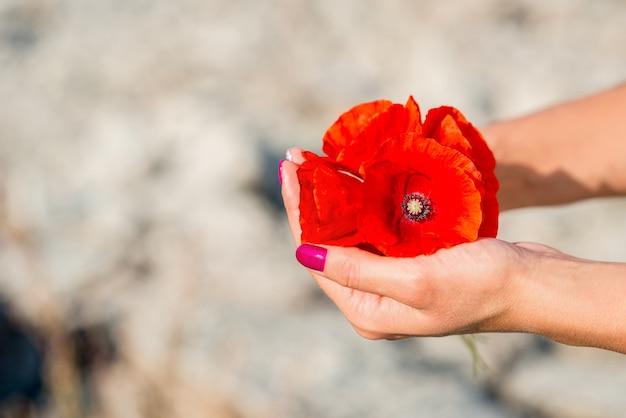 Lindas flores de papoula vermelhas nas mãos das mulheres
