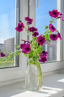 Lindas flores de petúnia em um vaso de vidro no parapeito da janela. clima de verão.