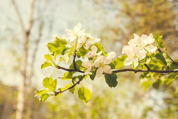 Lindas flores de primavera florescem na árvore