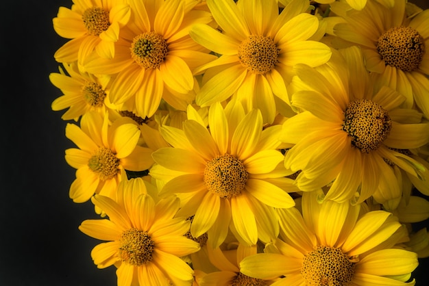 Lindas flores desabrochando amarelas sobre fundo preto.