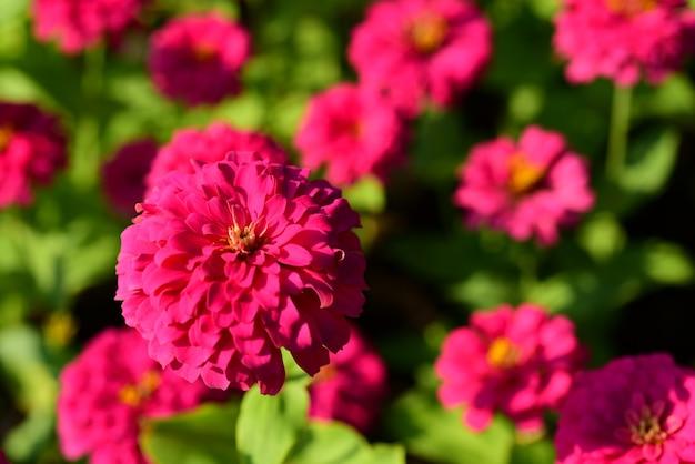 Lindas flores e folhas verdes. folhas verdes com luz solar bonita