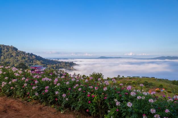 Lindas flores e névoa em khao kho, tailândia
