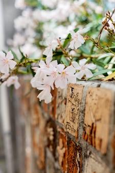 Lindas flores e ruas na vila de saint-paul-de-vence, no sul da frança