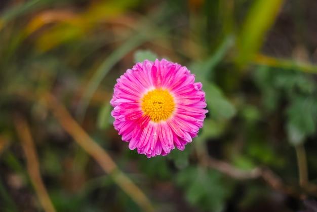 Lindas flores é sempre um feriado