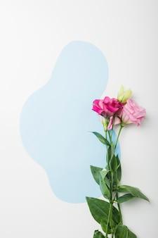 Lindas flores em fundo azul e branco