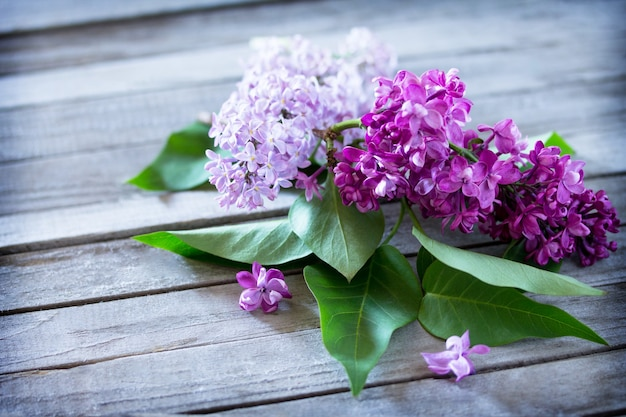 Lindas flores frescas de violeta lilás em um fundo de madeira.
