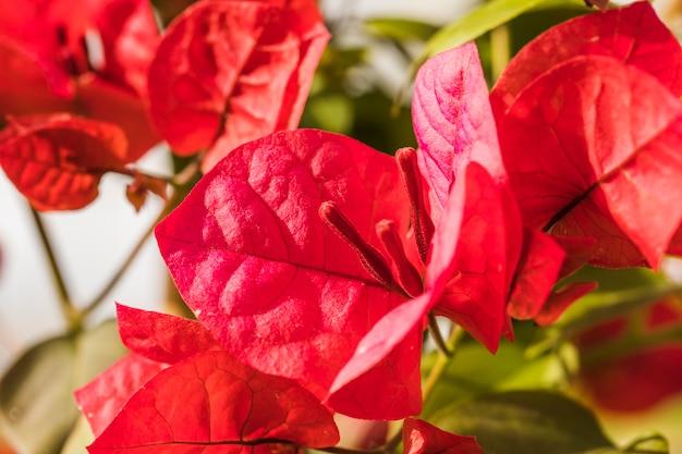 Lindas flores frescas vermelhas e folhas verdes em dia ensolarado