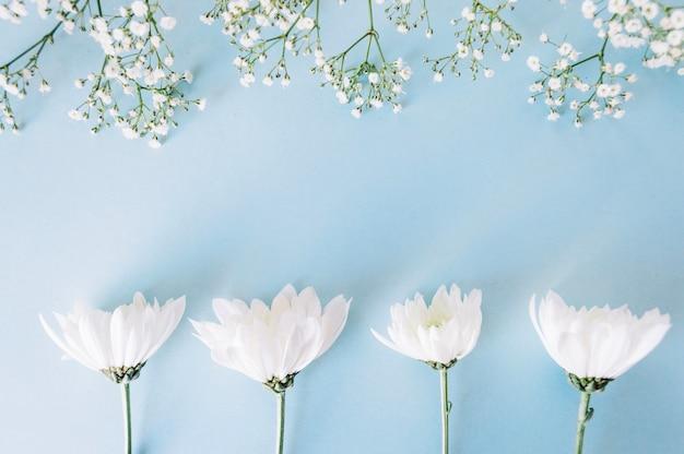 Lindas flores macias em azul