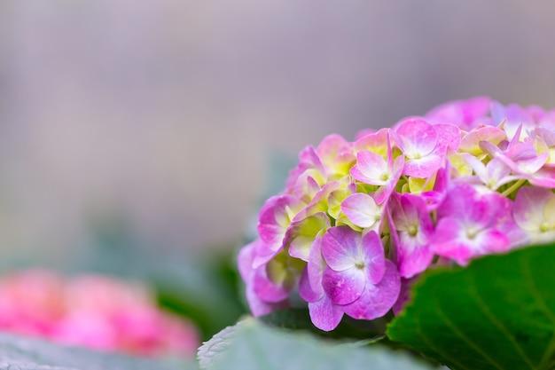 Lindas flores na natureza, copie o espaço.