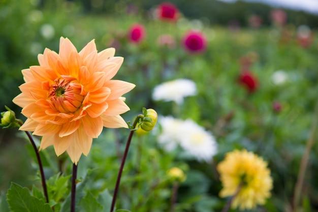 Lindas flores na primavera