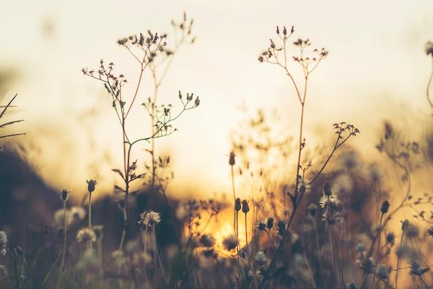 Lindas flores naturais com a luz do sol à noite.