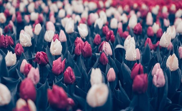 Lindas flores no parque primavera