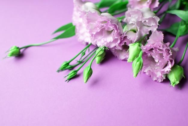 Lindas flores rosa eustoma (lisianthus) em plena floração com folhas de botões. buquê de flores sobre fundo lilás. copie o espaço