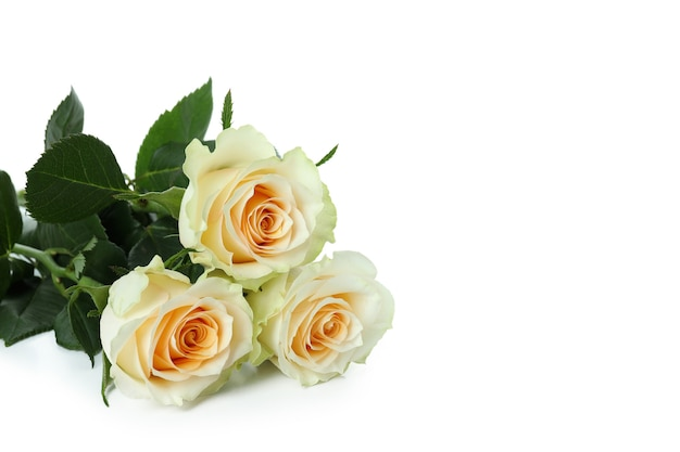 Lindas flores rosas isoladas em branco