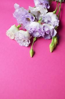Lindas flores roxas eustoma (lisianthus) em plena floração com folhas de botões. buquê de flores em fundo fúcsia. copie o espaço