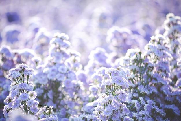 Lindas flores roxas na natureza