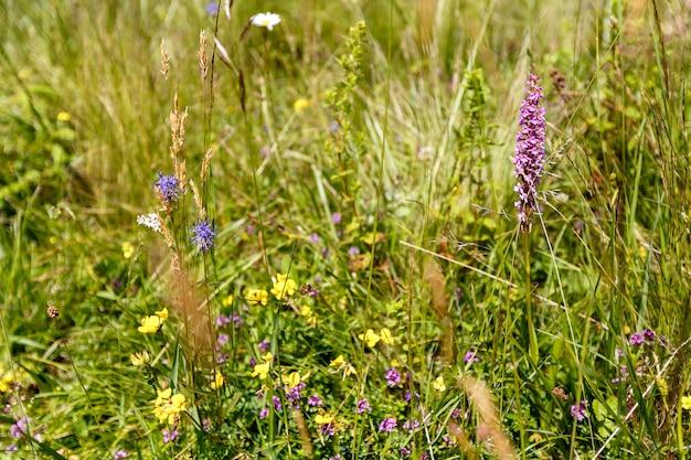 Lindas flores silvestres em um prado