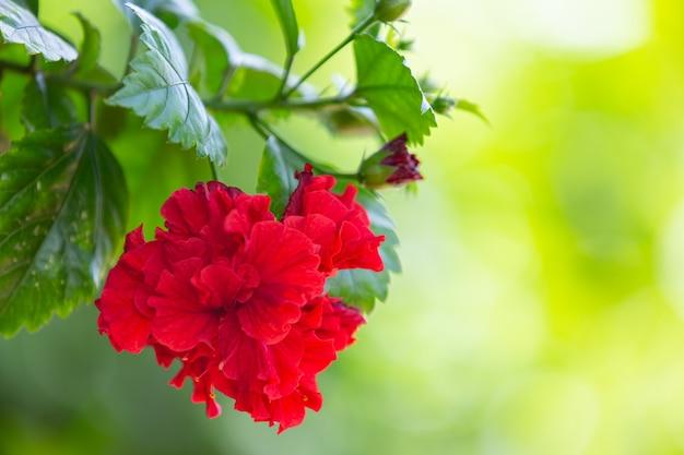 Lindas flores vermelhas desabrochando na natureza