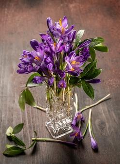 Lindas flores violetas de açafrão em um vaso na primavera