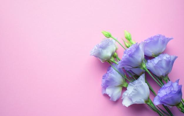 Lindas flores violetas eustoma (lisianthus) em plena floração com folhas de botões. buquê de flores em fundo rosa. copie o espaço