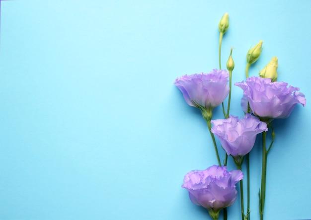 Lindas flores violetas eustoma (lisianthus) em plena floração com folhas de botões. buquê de flores sobre fundo azul. copie o espaço