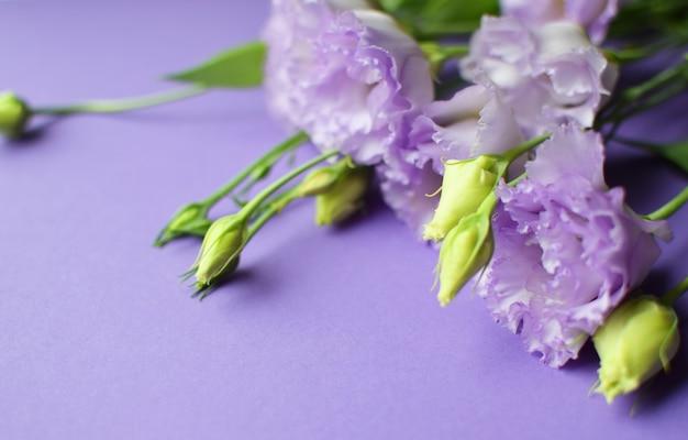 Lindas flores violetas eustoma (lisianthus) em plena floração com folhas de botões. buquê de flores sobre fundo lilás.