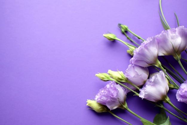 Lindas flores violetas eustoma (lisianthus) em plena floração com folhas de botões. buquê de flores sobre fundo roxo. copie o espaço