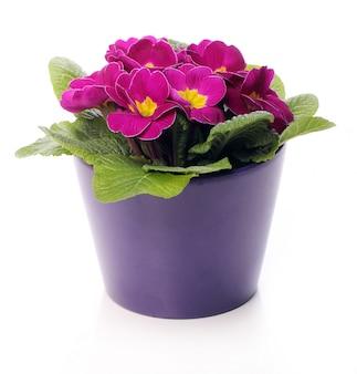 Lindas flores violetas