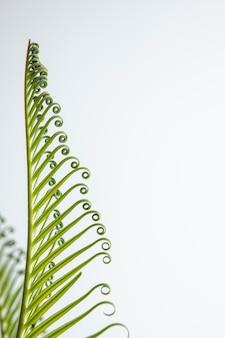 Lindas folhas de plantas com cachos