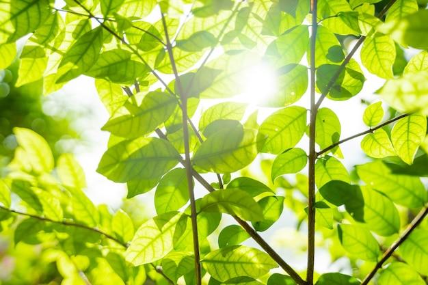 Lindas folhas verdes com luz solar. fundo verde natural com foco seletivo.