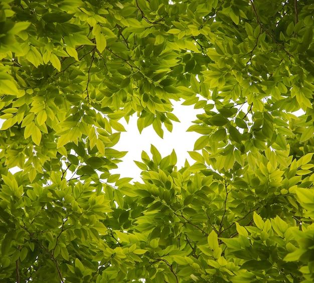 Lindas folhas verdes em fundo branco
