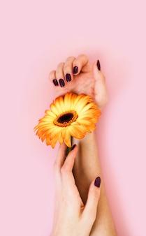 Lindas mãos femininas com manicure roxa segurando uma flor gerbera amarela
