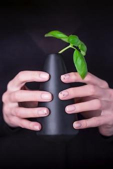 Lindas mãos femininas segurando um vaso preto com manjericão verde
