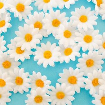 Lindas margaridas close-up vista sobre fundo azul