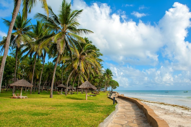 Lindas palmeiras na praia do oceano índico