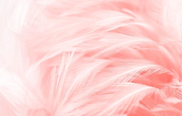 Lindas penas rosa macias