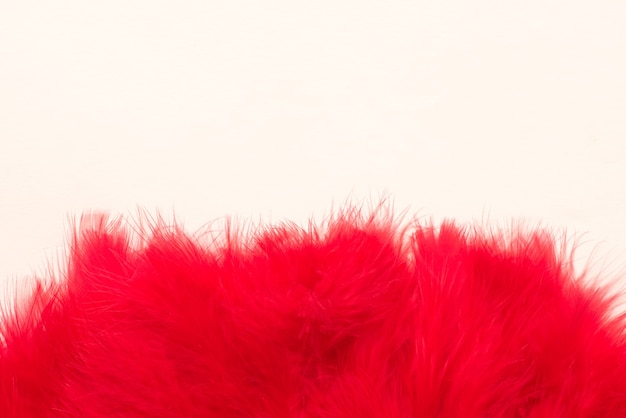 Lindas penas vermelhas em fundo branco