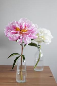 Lindas peônias rosa e brancas frescas em um vaso de vidro em um fundo cinza.